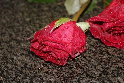 rose-3075998__340
